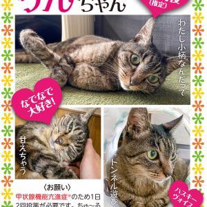 【9/26の譲渡会】参加予定猫ちゃんの紹介 その4