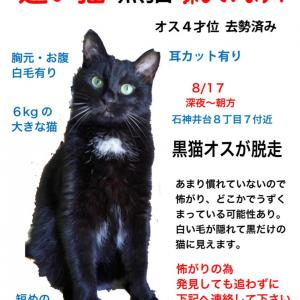 【拡散希望】練馬区で黒猫の迷子です