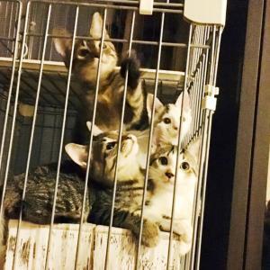 猫砂ご支援のお願い!!