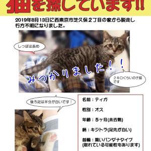 迷子猫ティガくん見つかりました!!