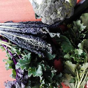 ビエトラ、黒キャベツ、ブロッコリ、蕪の葉、ケール
