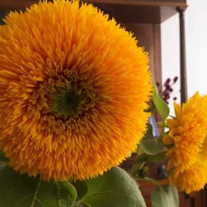 ヴァン・ゴッホという名の花