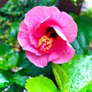 雨上がりの朝…そしてカマキリ‼(•'╻'• ۶)۶