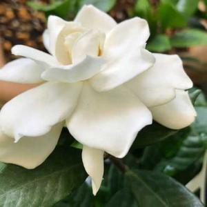 薔薇中心に花たちの思い出