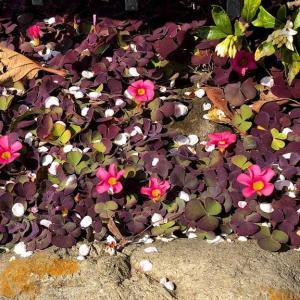 今更ですが梅の頃の花たち