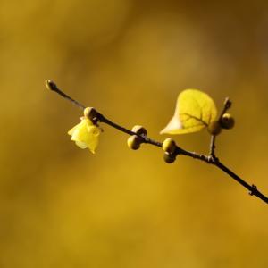 冬の花、秋の花