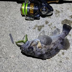 まともな釣りができない日々…