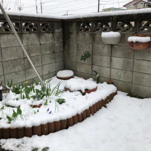 春だけど雪と外出自粛