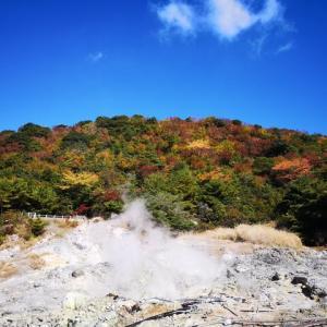 秋の大自然と「大自然の呼声」・母の老化が進んだ