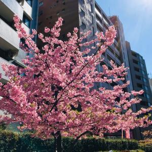 桜の開花とともに、自分のメンテナンスを。