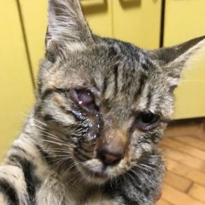 目が傷ついた仔猫4匹を引き取りました