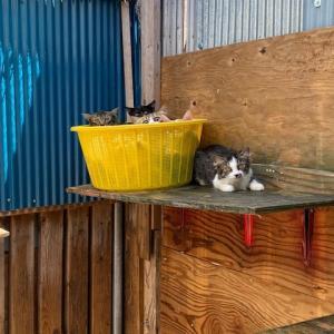浜松市からの猫達、避妊、去勢を始めます。