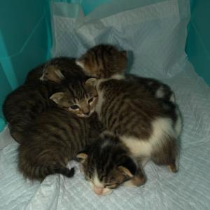 仔猫5匹保護しました。