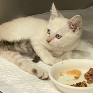 脊髄を損傷した仔猫