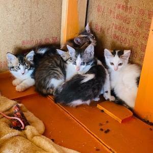 仔猫6匹保護しました。