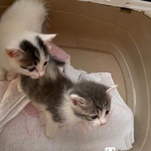 仔猫2匹、里子に出ました。
