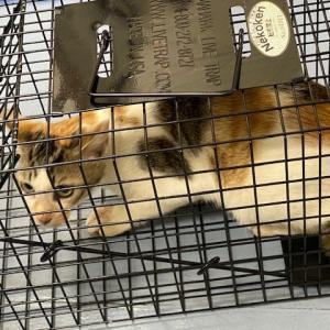 仔猫12匹保護した現場TNRしました。
