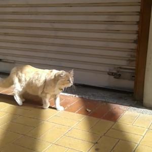 【会えれば幸せになれる?】Cuba streetの幸運猫のミトンさん