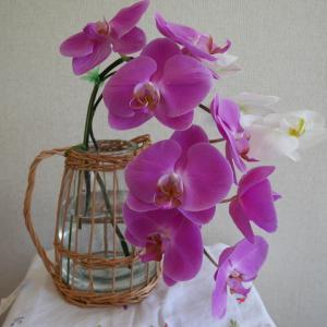 胡蝶蘭を花びんで楽しむ