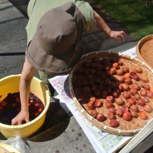 今日は「梅の番」とジャガイモ掘り