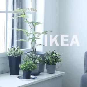 ★コスパ良し!IKEA人気の観葉植物を買ってきました