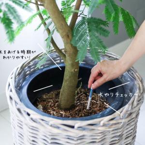 ★元気がない ! 大型観葉植物が枯れる原因を解決