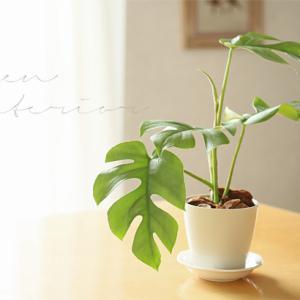 ★300円♪スーパーの鉢植えで夏インテリア