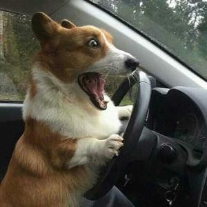 【悲報】イッヌ、うっかり交通事故を起こしてしまう・・・