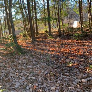 山の森遊び