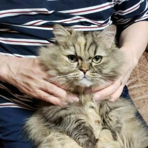 ネコも肩もみが好き?
