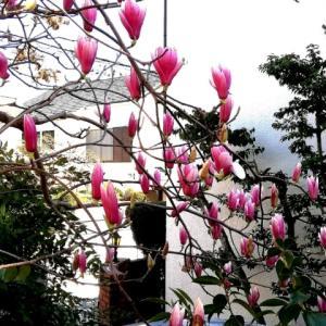 今日 春の暖かさ