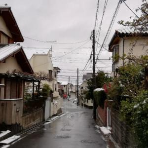 雪だ!!! ここは平地なんだけど  29mar2020