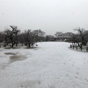 珍しく、大阪でも雪が積もってます