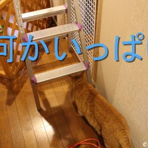 猫扉の補強工事をしよう