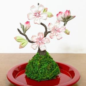 山桜の苔玉仕立て