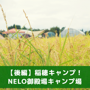 【後編】NELO御殿場(ネロゴテンバ)で稲を見ながらまったりキャンプしてきたレポ