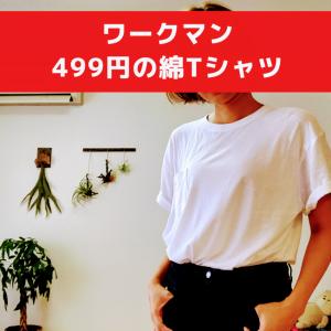 ワークマンで499円の綿Tシャツ着てみた&明日スッキリに出演します