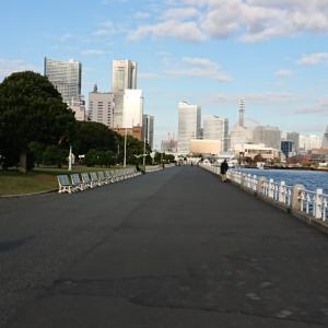 たまの横浜、朝は山下公園