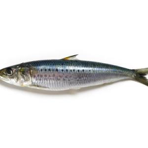 海にこんな魚いる?