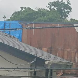 台風15号の後