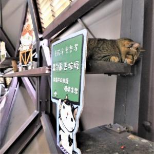 弾丸!台湾旅行(4)猴硐・猫村 その1