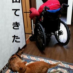 車椅子で脱走する母