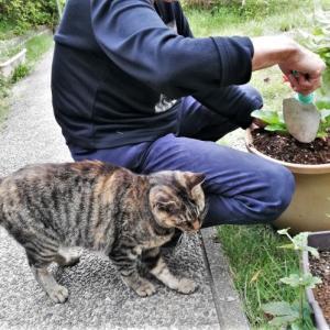 一人暮らし高齢者は猫を飼えない