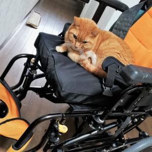 猫は車椅子が好き