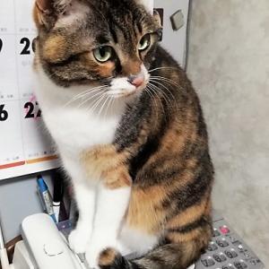 猫が電話に出た!
