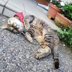 猫が与えてくれる幸せ