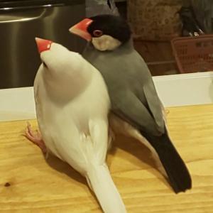 愛鳥との別れ
