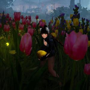 神秘的な黄金色の卵のイベント、拾えない?できない?【黒い砂漠】