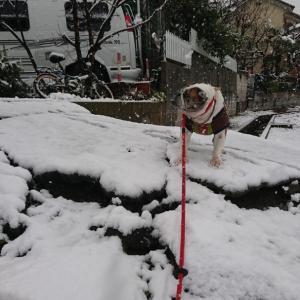 雪降った‼️