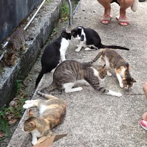 台湾の猫村 CNN世界6大猫スポット『炭鉱の町、猴硐(ホウトン)』の行き方